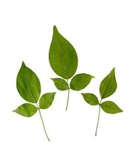 Vilva Leaf / Bel Patta